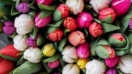 Tulips Bouquet Wallpaper