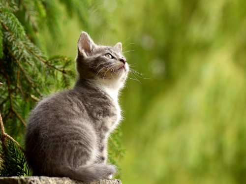 Curious Kitten on Fencepost  Wallpaper