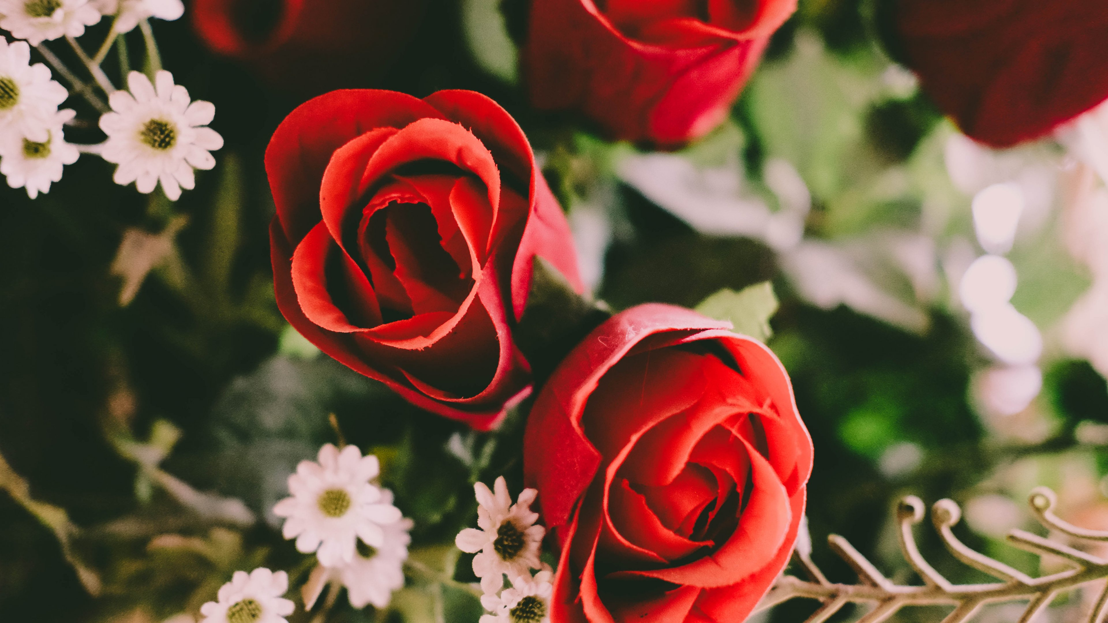 Download Wallpaper Mobile Red Rose - 32_wide  Collection_695846.jpg