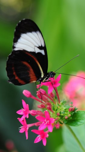 Pretty Butterfly on Pink Flower