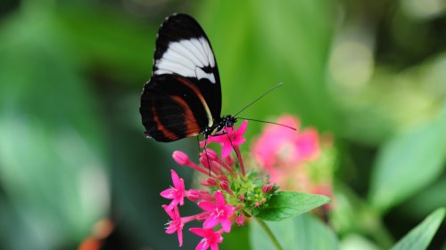 Pretty Butterfly on Pink Flower HD Wallpaper