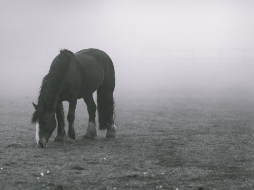 Horse in Fog  Wallpaper