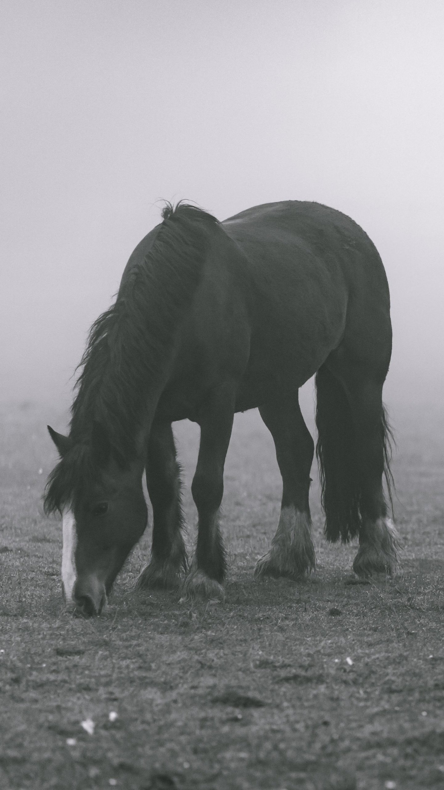 Horse In Fog Wallpaper Iphone Android Desktop Backgrounds
