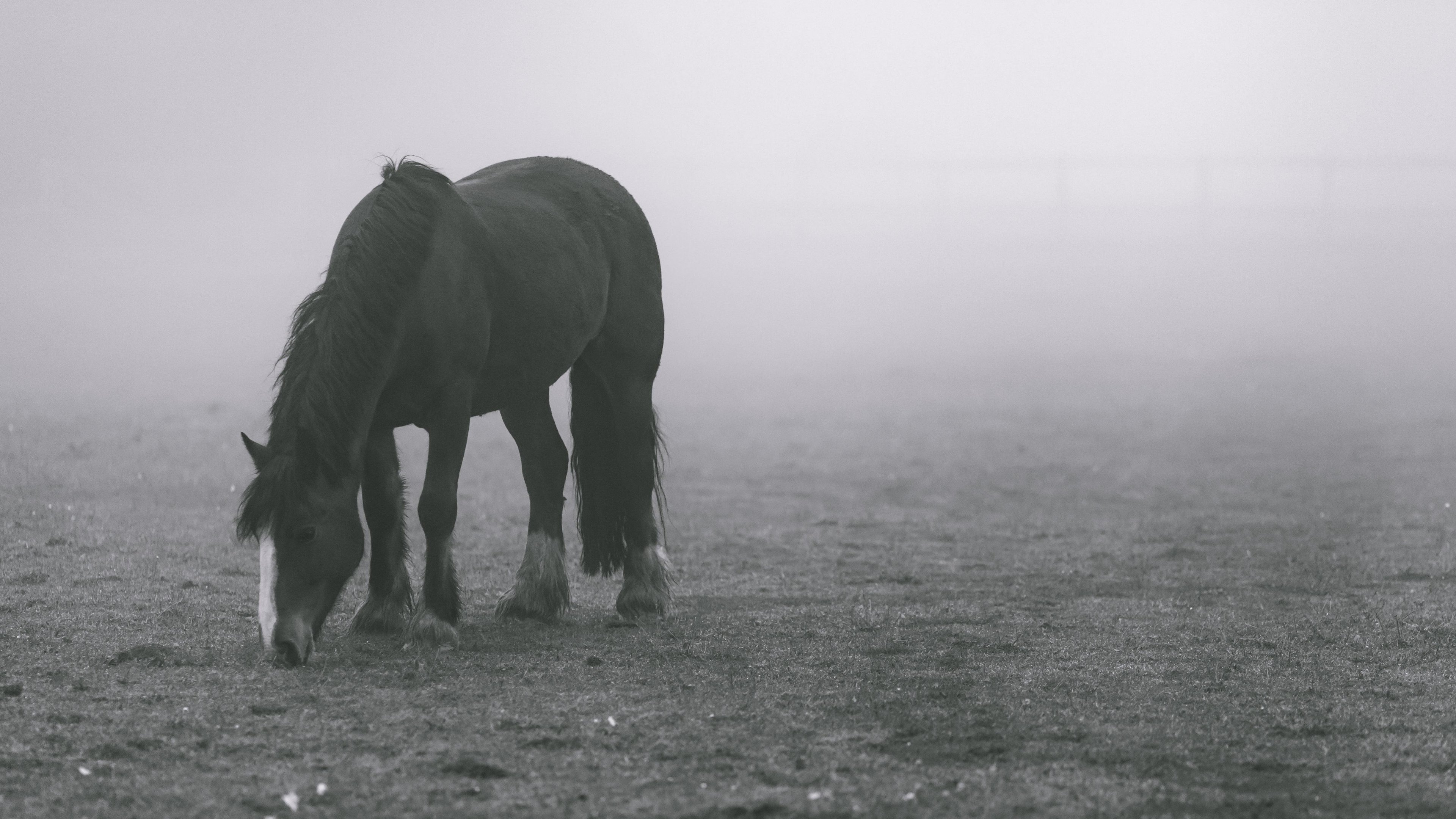 Horse In Fog Wallpaper