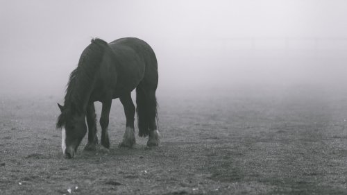 Horse in Fog HD Desktop Wallpaper