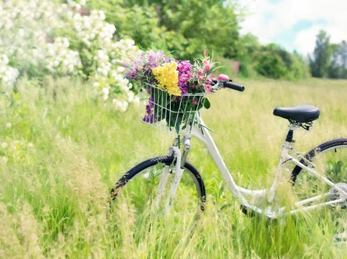 Romantic Bicycle in Meadow  Wallpaper