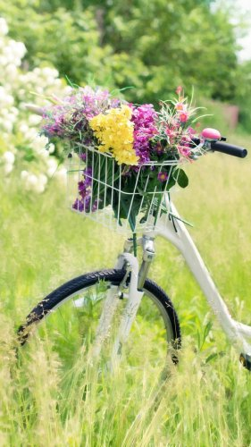 Romantic Bicycle in Meadow Mobile Wallpaper