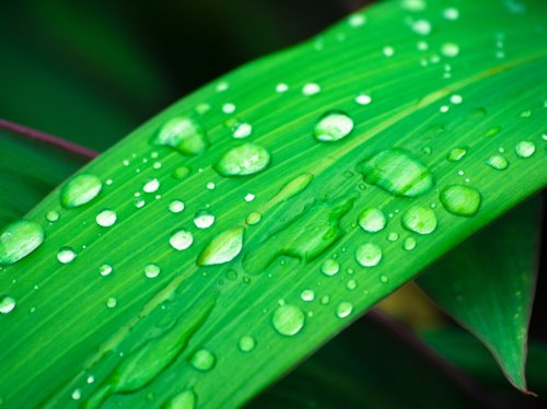 Grass in Rain  Wallpaper