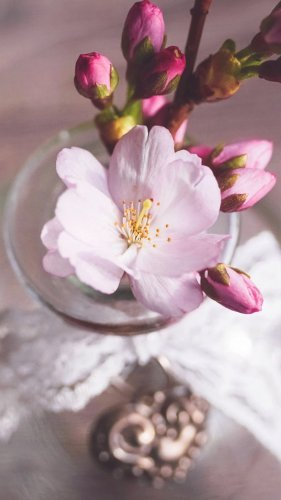 Romantic Pink Cherry Blossom Flowers in Vase