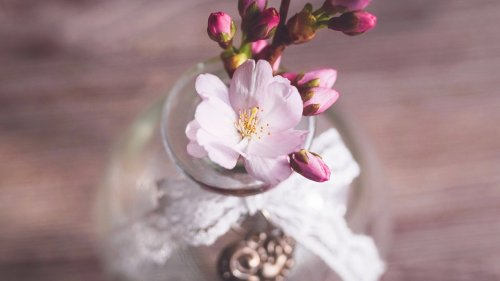 Romantic Pink Cherry Blossom Flowers in Vase Wallpaper