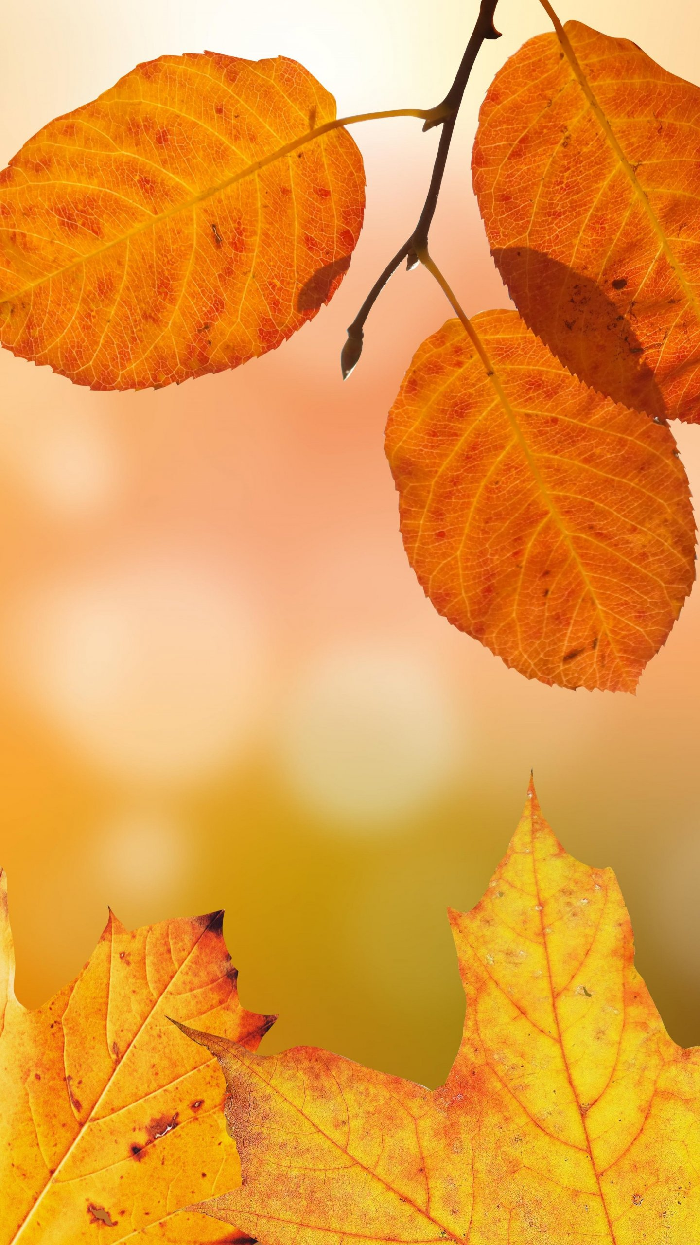 Autumn Leaves Wallpaper Iphone Android Desktop Backgrounds