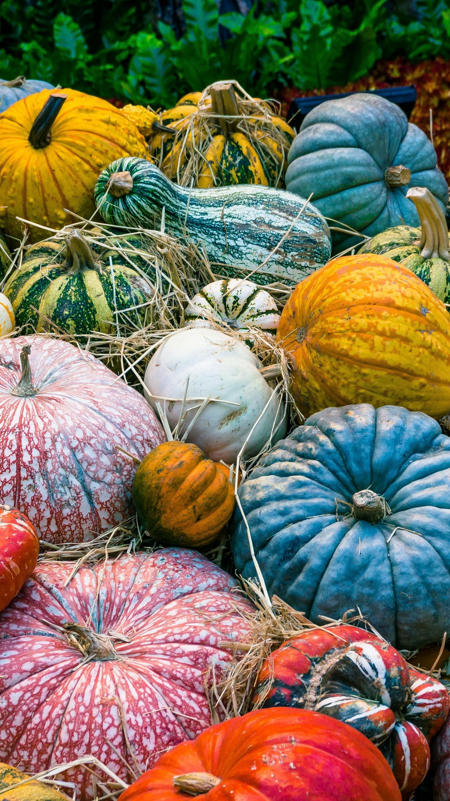 Colorful Pumpkins Wallpaper Iphone Android Desktop