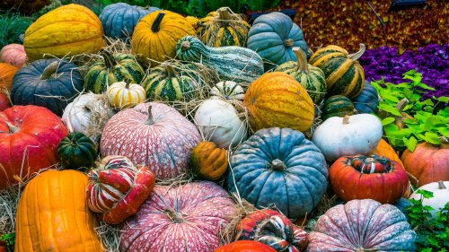 Colorful Pumpkins Wallpaper