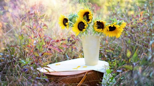 Romantic Picnic Basket & Sunflowers Wallpaper
