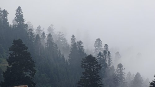 Foggy Trees in Forest Wallpaper