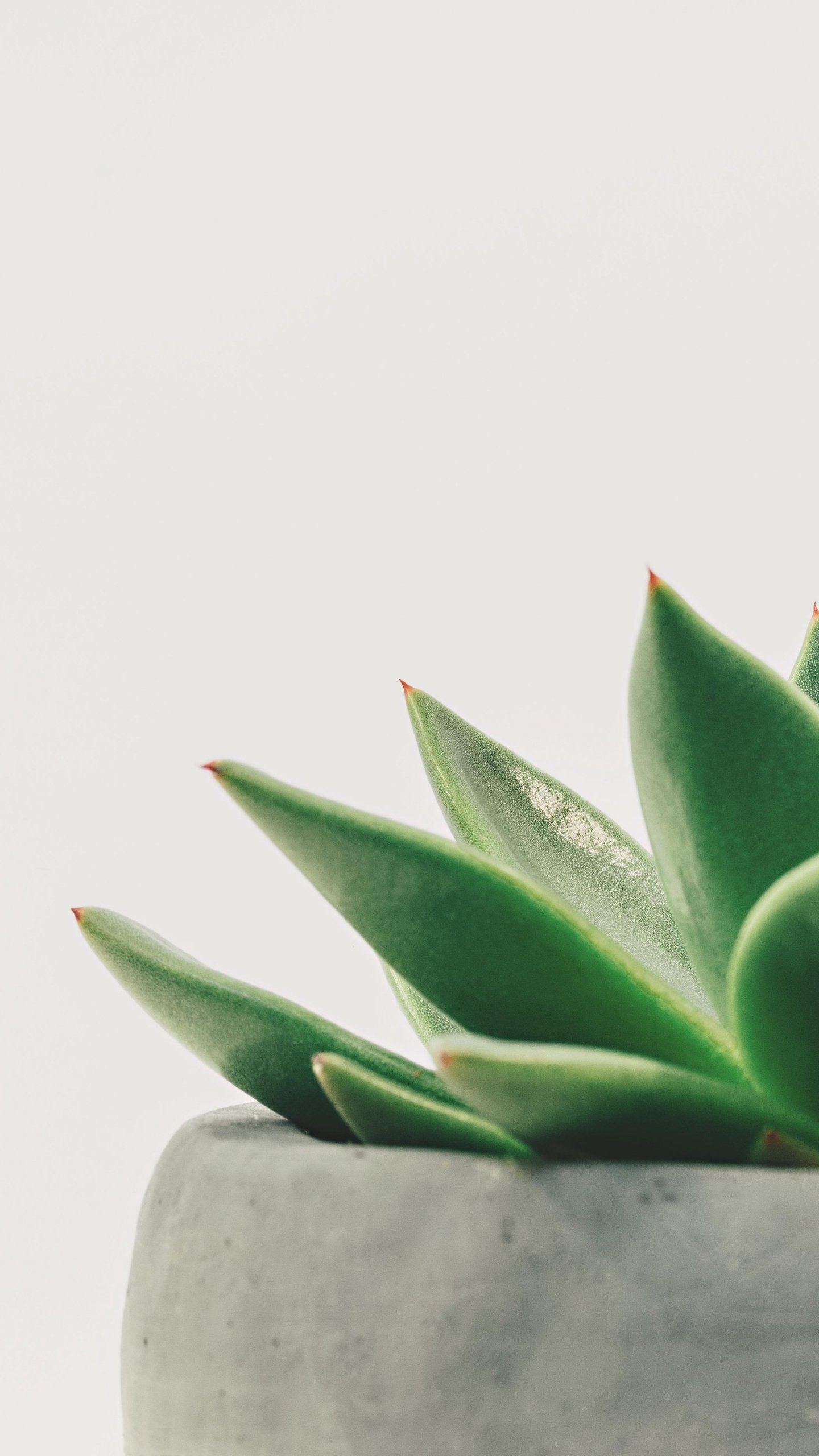 Minimalist Succulent Wallpaper Iphone Android Desktop