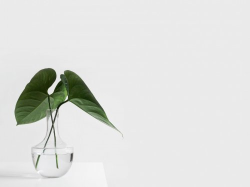 Minimalist Aesthetic Plant in Clear Vase