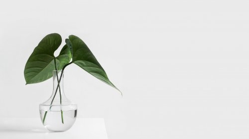 Minimalist Aesthetic Plant in Clear Vase Wallpaper