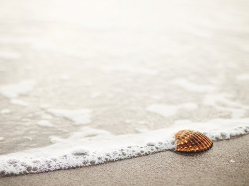 Shell on Beach  Wallpaper