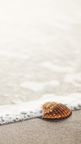 Shell on Beach Mobile Wallpaper