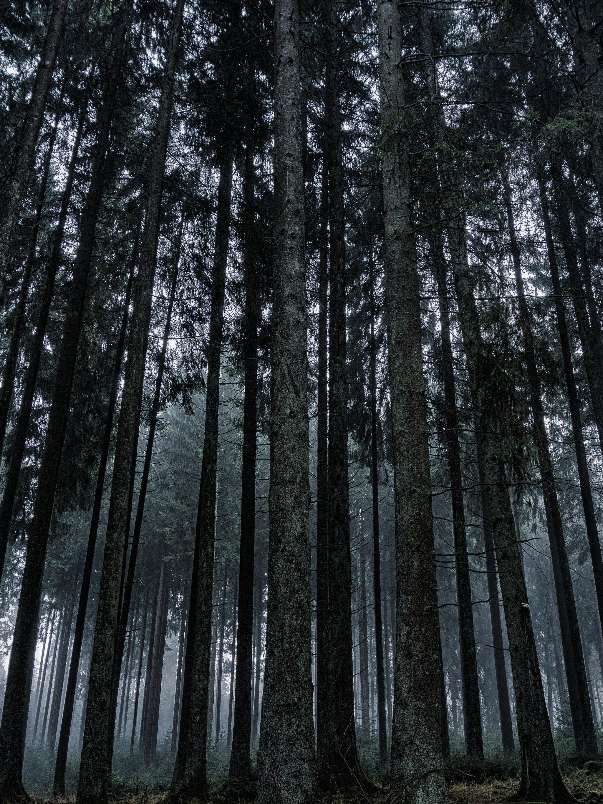 Dark Forest Wallpaper Iphone Android Desktop Backgrounds