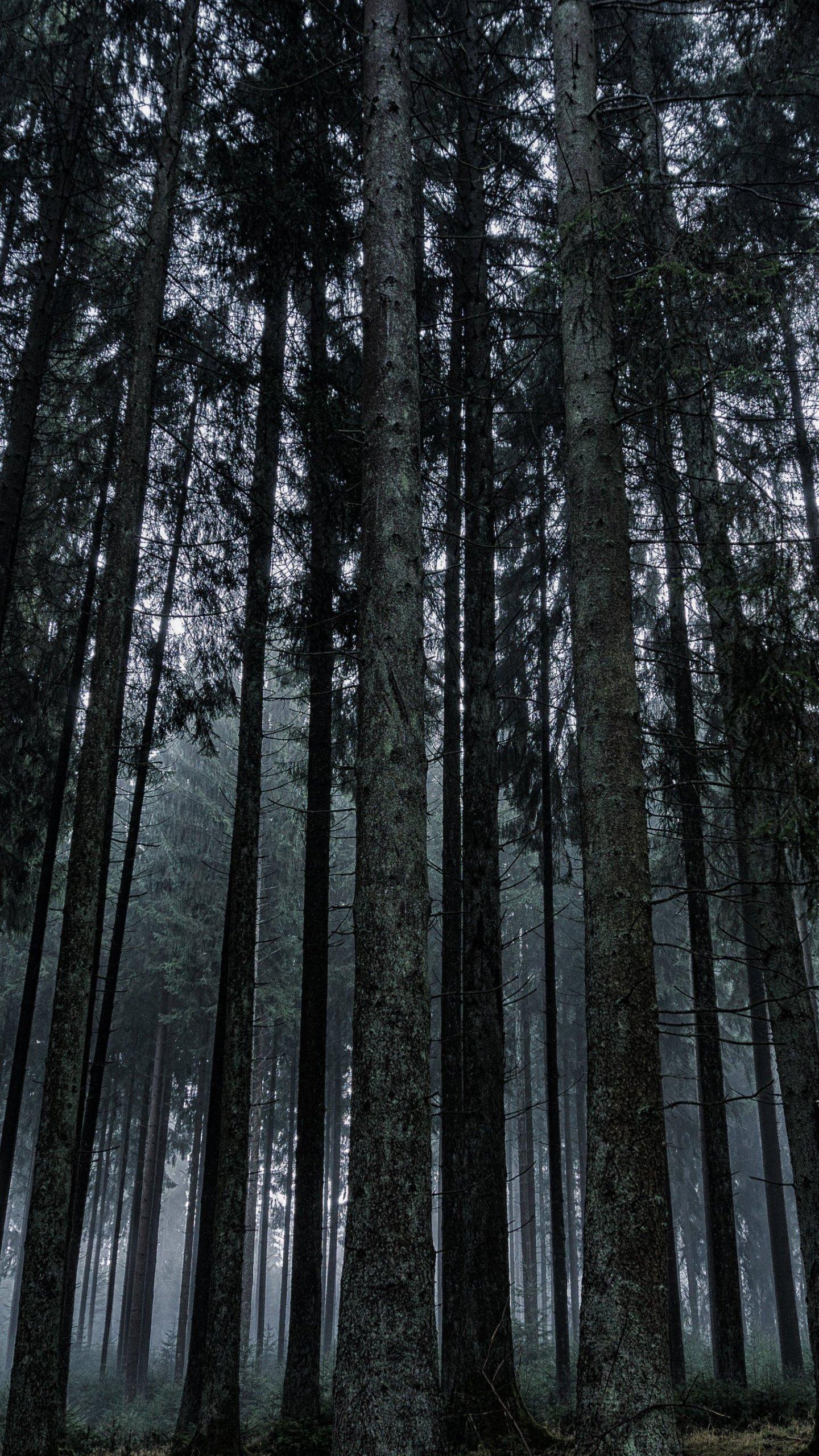 Dark Forest Wallpaper Mobile Amp Desktop Background