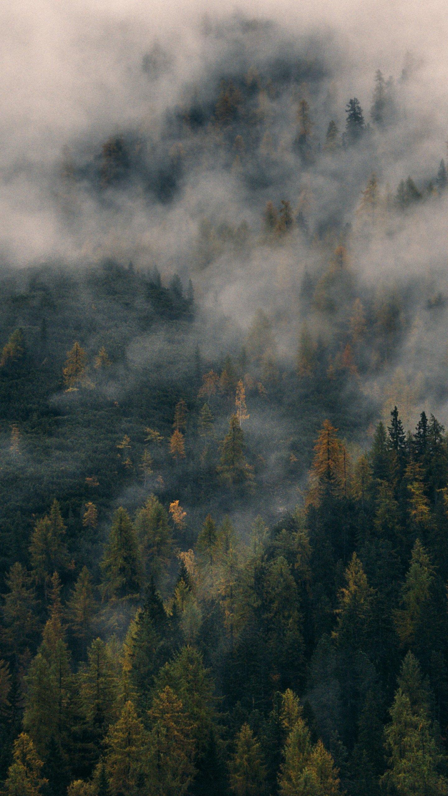 Foggy Forest Hill Wallpaper Mobile Amp Desktop Background