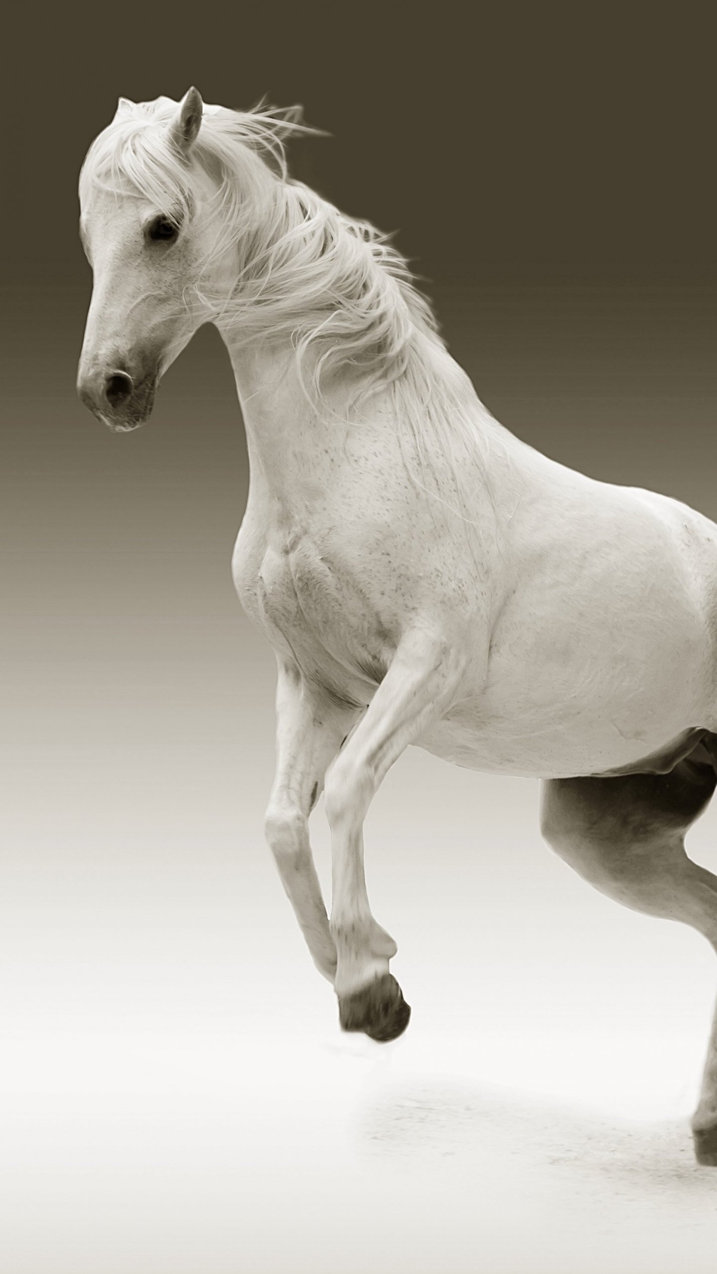White Horse Wallpaper Iphone Android Desktop Backgrounds