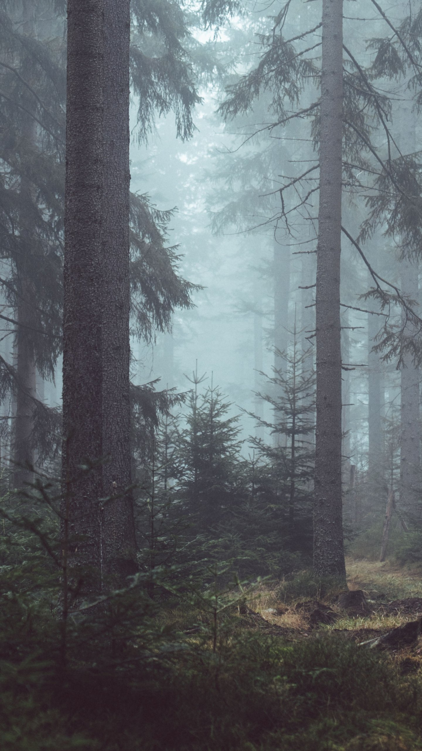 misty forest wallpaper iphone, android \u0026 desktop backgrounds