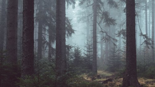 Misty Forest HD Desktop Wallpaper