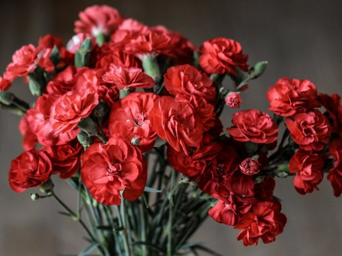 Red Carnations  Wallpaper