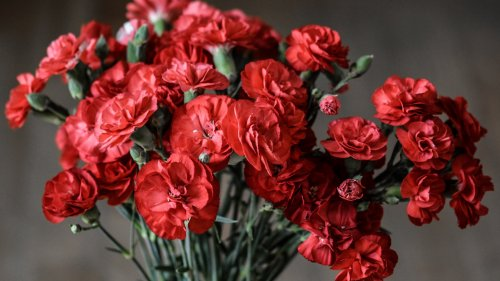 Red Carnations HD Wallpaper