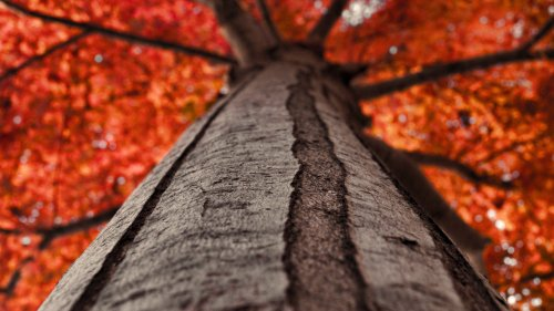 Tree Trunk Looking Up HD Wallpaper